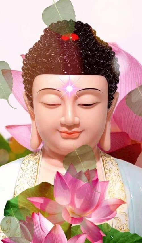 Nên niệm Phật 4 chữ hay 6 chữ